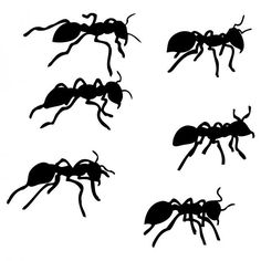 Six Ants by Karl Addison - Six Ants Drawing - Six Ants Fine Art Prints and Posters for Sale