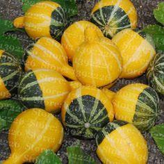 20pcs Rare Yellow Green Decorative Pumpkin Fresh Seeds, Bi Color Squash Rare Vegetable Seeds Free Shipping #Affiliate