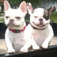 Lucy & Ethel,  French Bulldogs    This is for @Marty McPadden Vernon and @Victoria Brown Vernon
