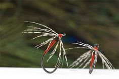 Troutline Tactical North Country Rusty Orange Spider is one of the most productive fly from wet series. Best Fishing Reels, Fly Fishing Lures, Spider Fly, Blue Winged Olive, Orange Spider, Fly Tying Patterns, North Country, Salmon Fishing, Nymphs