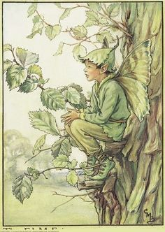 Illustration for the Elm Tree Fairy from Flower Fairies of the Trees. A boy fairy sits on a small branch, leaning against the trunk of an elm tree. He faces right.  										   																										Author / Illustrator  								Cicely Mary Barker