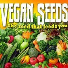 25 VEGETABLE Emergency Survival Seed Container Garden Heirloom NON-GMO BANK  SET