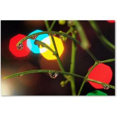 Trademark Fine Art Drops of Christmas Past Canvas Art by Steve Wall, Size: 30 x 47, Multicolor