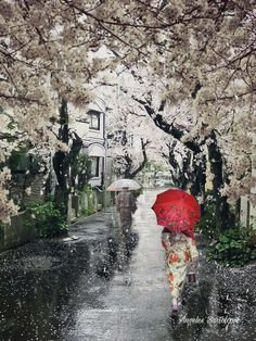 The silence after rain.how quickly the sky pulls itself together Beautiful World, Beautiful Places, Bg Design, Smell Of Rain, Japan Painting, Umbrella Art, Sakura, Kyoto, Japanese Culture