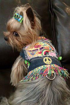 Hippie Yorkie