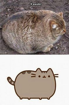 The Real Pusheen, poor kitty its way over weight, I feel real sad for this kitty!! But so cute!