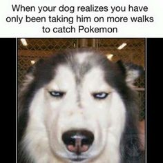 a071ac712b8396f45b5614b43005ecb8 funny dog memes funny dogs 45 funny dog memes dog memes, funny captions and memes,Funny Dog Face Meme