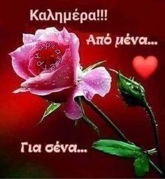 Good Morning Prayer, Good Morning My Love, Good Morning Picture, Good Morning Flowers, Morning Prayers, Morning Pictures, Morning Pics, Morning Blessings, Morning Wishes Quotes