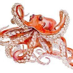Octopus Original Watercolor painting fine art artwork wall home decor ocean sea animal illustration 13x19. $60.00, via Etsy.