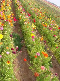 Flower farm!