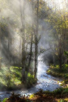 """Beautiful Pictures on """"Fog & sunlight. Photo by Miki Asai. All Nature, Amazing Nature, Nature Water, Nature Tree, Beautiful World, Beautiful Places, Landscape Photography, Nature Photography, Nature Pictures"""