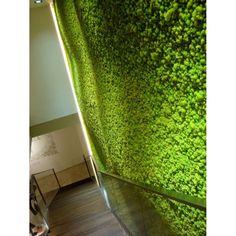 ・ Mousse, Moss Fashion, Ceiling, Curtains, Wall, Design, Home Decor, Lyon, Acoustic Music