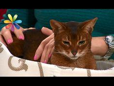 Еда для кота. Часть 1. - YouTube
