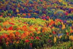 Every conceivable shade of neon can be found in this HDR shot of a Petosky, Michigan forest in the fall.