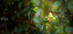 Natural sunlight by Khalid_Fineza  Details