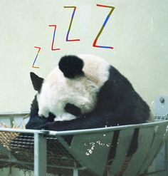 Sleepy Panda Art Print by Luke Forhsaw Photography