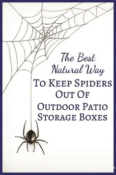 Buy Flowers Online Same Day Delivery This Natural Way To Keep Spiders Out Of Outdoor Patio Storage Boxes Is The Best It Doesn't Use Pesticides Or Other Harmful Chemicals. Furthermore, It's So Easy, I'm Going To Try It In My Shed, Too. Certainly Pinning Outdoor Storage Boxes, Patio Storage, Patio Cushion Storage, Patio Cushions, Storage Sheds, Porches, Deck Cleaner, Get Rid Of Spiders, Bug Off