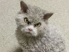 This Cat With A Resting Bitchface Is Sick Of Your Sh-t - MTV