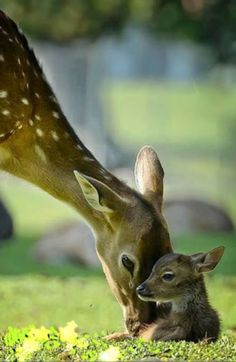 NOTHING IN THE WORLD AS STRONG AS A MOTHER'S LOVE FOR HER BABIES.....
