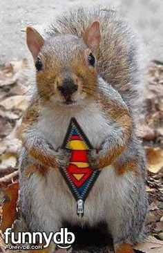 Squirrels, especially if there's a chance they may turn into Super Squirrel!!