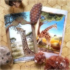 Giraffe cards from the Animal Totem Tarot (left) and the Animism Tarot (right). / Photo © www.VioletAura.com