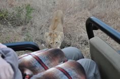 On Track Safari News: How close