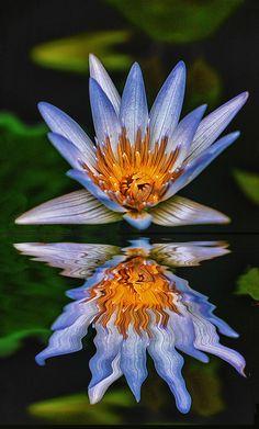500px / Reflected Glory by Victor Caroli