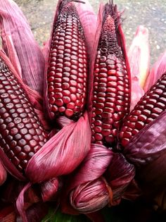 Blushing corn IN THE PINK Pink love, Everything pink, Color pink color on corn - Pink Things Pink Love, Red And Pink, Pretty In Pink, Hot Pink, Marsala, Photo Fruit, Glass Gem Corn, Sante Bio, In Natura