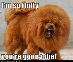 Some one told me I was fluffy but I don't think they meant it in the same way.