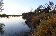 Morning at Pyap, South Australia