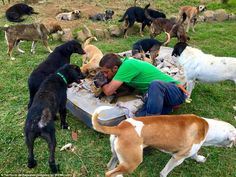 Land of the strays in Costa Rica http://www.dailymail.co.uk/news/article-3523048/Doggy-Heaven-canine-paradise-Land-Strays-Costa-Rica-nearly-1-000-pooches-allowed-run-free.html