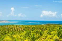 Gunga Beach - Alagoas