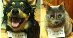 Dog shaming / cat shaming Love that expression on the cat's face! Funny Animal Pictures, Cute Funny Animals, Funny Cute, Funny Dogs, Cute Dogs, Hilarious, Panda Funny, Funniest Animals, Animal Pics