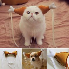 Where Are My Drumsticks Cat Costume – Crazy Cat Shop Cute Cat Costumes, Dog Costumes, Funny Cats And Dogs, Cute Cats, Adorable Dogs, Cat Lover Gifts, Cat Gifts, Yorkie Poodle, Yorkie Puppies