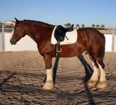 First Draft Farms - Clydesdale