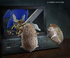 sonic the hedgehog by Elena Eremina on 500px