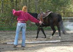 desensitizing the horse to guns