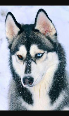 Her dog, Alaska