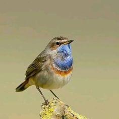 Most Beautiful Birds, Beautiful Photos Of Nature, Nature Pictures, Funny Bird Pictures, Beautiful Pictures, Funny Birds, Cute Birds, Pretty Birds, Exotic Birds
