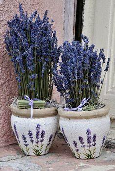 Lavanda en macetas de cerámica #DecorarConFlores #Lavanda