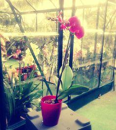 Orquidea #SanValentin #DosHermanas #vivero