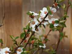 It's Spring again by Buble Deviantart, Traditional, Spring, Artist, Flowers, Plants, Photography, Inspiration, Biblical Inspiration