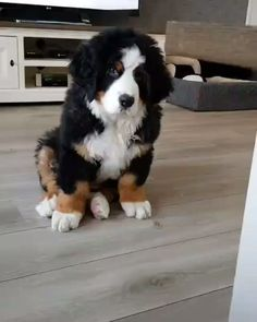 Cute Funny Dogs, Cute Funny Animals, Cute Baby Animals, Animals And Pets, Cute Big Dogs, Big Fluffy Dogs, Cute Dogs And Puppies, Baby Dogs, Pet Dogs