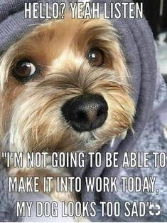 Yorkshire Terrier – Energetic and Affectionate Yorshire Terrier, Silky Terrier, Bull Terriers, Cute Puppies, Cute Dogs, Dogs And Puppies, Poodle Puppies, Awesome Dogs, Funny Dogs