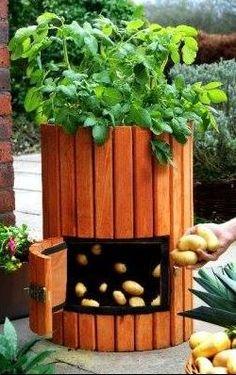 """O Lado de Cá: Dica: """"Como plantar batatas em casa"""""""