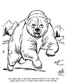 Drawings Of Wild Animals   Animal Drawings Coloring Pages   Grizzly Bear animal identification ...