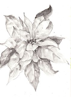 Image detail for -Poinsettia Sketch using Sketch & Wash Pencils and Aquabrushes
