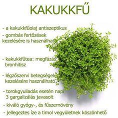 Életmód cikkek és képtár: Zöldség és gyümölcsök hatásai Herbal Remedies, Health Remedies, Natural Remedies, Health And Beauty Tips, Vegan Recipes Easy, Kraut, Natural Healing, Healthy Tips, Herbalism