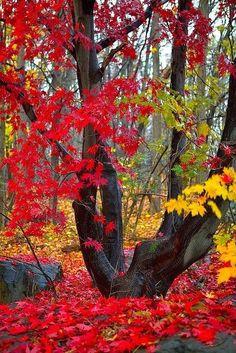 Fall Colors - Trout Lake