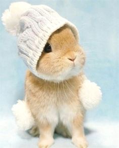 Puppies and kittens aren't the only cute animals in nature. Why would humans find baby animals cute to look at, Baby Animals Pictures, Cute Animal Pictures, Animals And Pets, Pet Pictures, Cute Little Animals, Cute Funny Animals, Cute Baby Bunnies, Cute Babies, Bunny Bunny